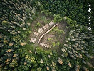 The Logging Outbreak