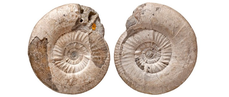 William Smith's ammonites